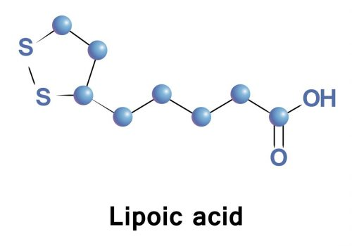 Can Alpha Lipoic Acid (ALA) Help You Lose Weight?